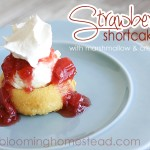 Strawberry Shortcake by Blooming Homestead1