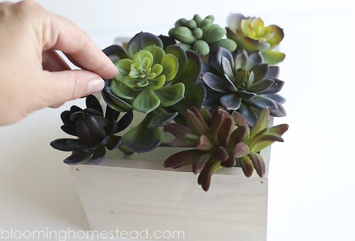 DIY Succulent Home Decor by Blooming Homestead4