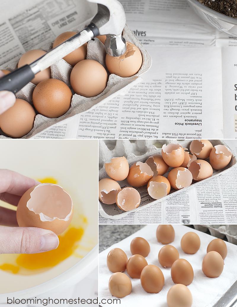 Drying egg shells