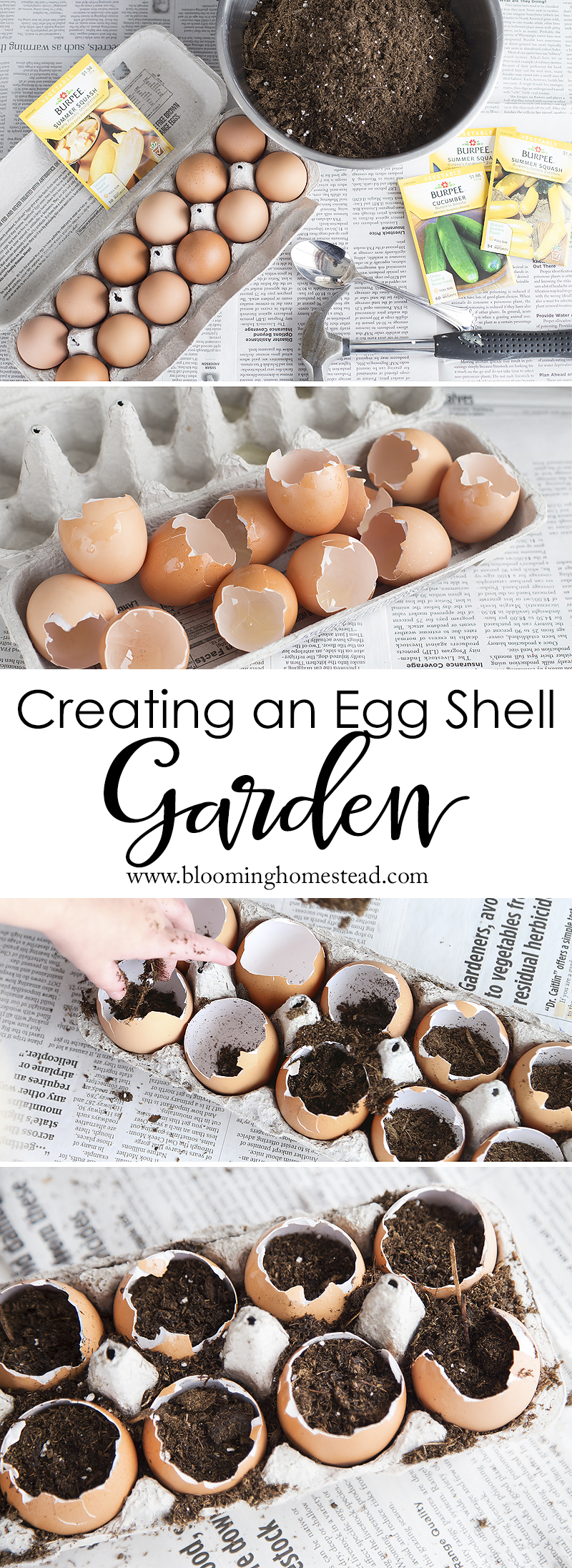 Easy to follow tutorial showing how to create an eggshell garden. Perfect for seed starting and the kids can help!